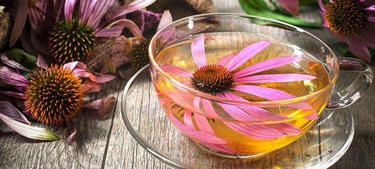 home-remedies-low-immunity-echinacea-tea